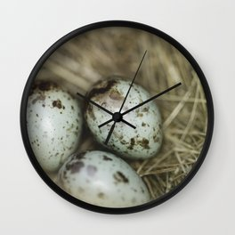 Robins eggs Wall Clock