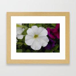 White Petunia Framed Art Print