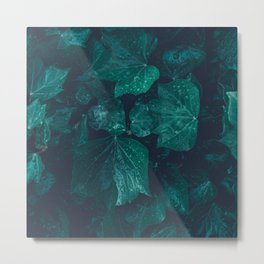 Dark emerald green ivy leaves water drops Metal Print