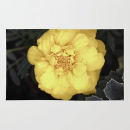 The Soft Yellow Flower (Vintage) Rug