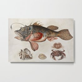 Vintage Fish and Crab Illustration by Maria Sibylla Merian, 1717 Metal Print