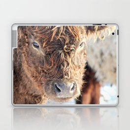 Galloway Cow Laptop & iPad Skin