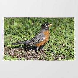 American Robin in the Grass - Photography Rug