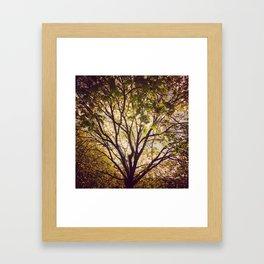 Golden afternoon Framed Art Print