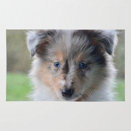 Blue-eyed Portrait of a Shetland Sheepdog Puppy Rug