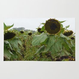 Sullen Sunflowers Rug