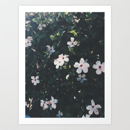 Flowers in the Summer Art Print