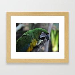 Green Macaw  Framed Art Print