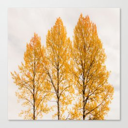 Aspen Trees #decor #buyart #society6 Canvas Print