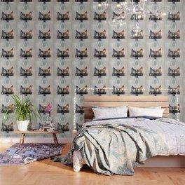 Cat Fish Wallpaper