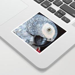 African Grey Parrot Sticker