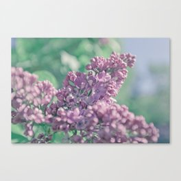 Pastel ultra violet colors. A branch of lilac close-up. Canvas Print