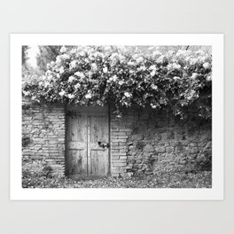 Old Italian wall overgrown with roses Art Print