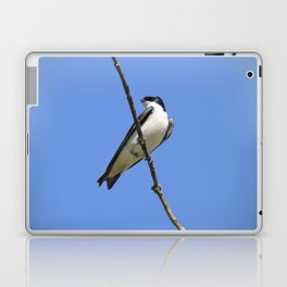 Handsome Male Tree Swallow on a Branch Laptop & iPad Skin