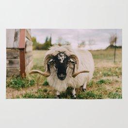 The Curious Sheep Rug