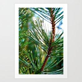 Pine Needles No. 1 Art Print