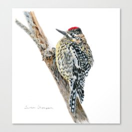 Yellow-bellied Sapsucker by Teresa Thompson Canvas Print