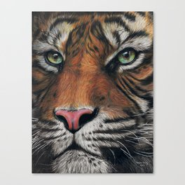 Tiger Drawing Canvas Print