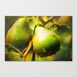 Wild Pears Canvas Print