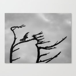 A Peregrine Falcon Mimicks Tree Branches Canvas Print