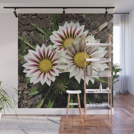Zany Gazania - red and white stripes Wall Mural