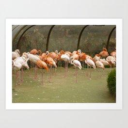 Bird Time Art Print