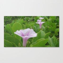 WILD BEACH FLOWERS Canvas Print