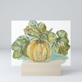 Antique Botanical Sketch Pumpkin Mini Art Print