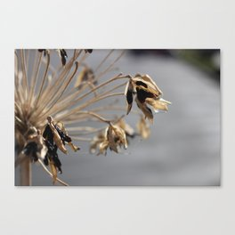 Spikey Flower Canvas Print