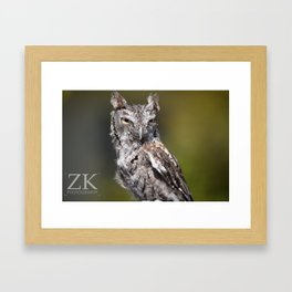 Young Owl Framed Art Print