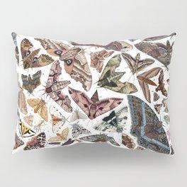 Moths of North America Pillow Sham