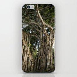 Banyan Tree at Bonnet House iPhone Skin