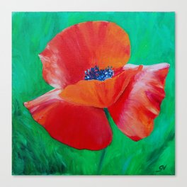 Single Poppy Canvas Print