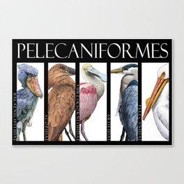 Pelecaniforms Canvas Print