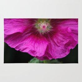 Magnificent pink flower of Rose Mallow, Lavatera Ruby Regis, Lavatere a Grandes Fleurs Rug