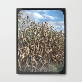Corn About Ready to Harvest Metal Print