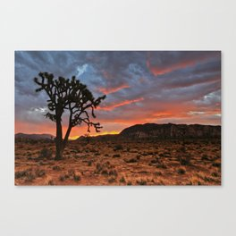 Joshua Tree Sunrise Canvas Print