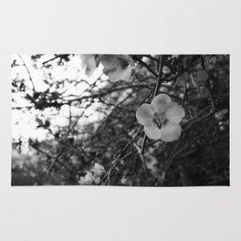 A spring blossoms Rug