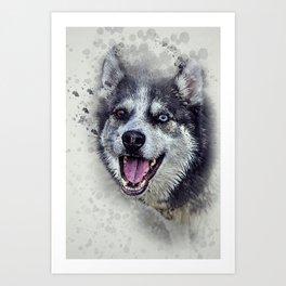 Beautiful husky Art Print
