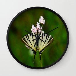 Scarce Swallowtail On Wild Garlic Flowers Wall Clock
