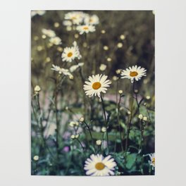 Daisy II Poster