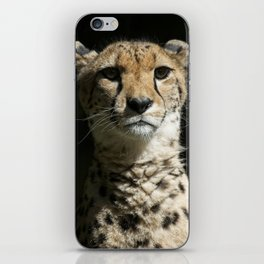 Cheetah Portrait iPhone Skin