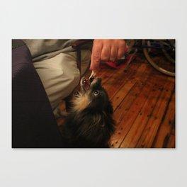 begging chihuahua Canvas Print