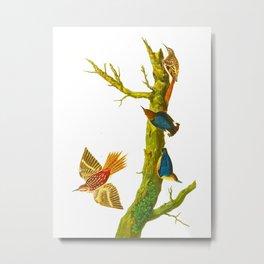 Brown Creeper Bird Metal Print