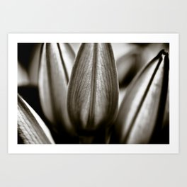 Black And White Lily Buds Art Print