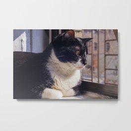 Cat Afternoon Metal Print