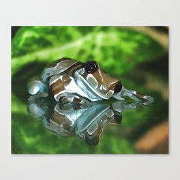 Amazon Milk Frog Canvas Print