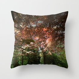 Autumn Beeches Throw Pillow