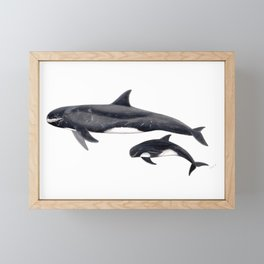 Pygmy killer whale Framed Mini Art Print