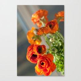 Orange you glad, ranunculus? Canvas Print